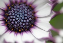 25幅非常精美的鲜花摄影作品欣赏-小李子的blog
