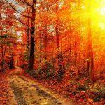 那一抹秋色!漂亮的秋天风景壁纸【组图】-小李子的blog